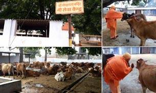 Yogi Adityanath: Gau sevak to UP CM; does this mean 'achchhe din' for cows?